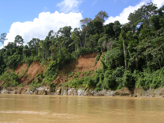 This photo depicts a section of the Amazon River, which is brown with mud. Trees line the edge of the river.