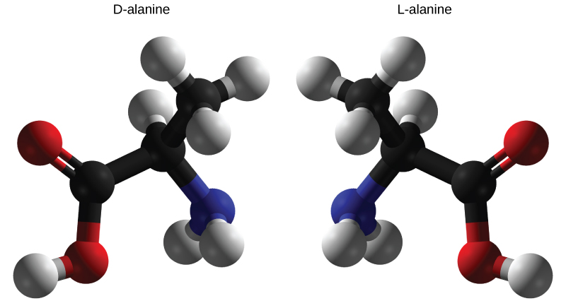 Molecular models of D-and L-alanine are shown. The two molecules, which contain the same number of carbon, hydrogen, nitrogen atoms, are mirror images of one another.