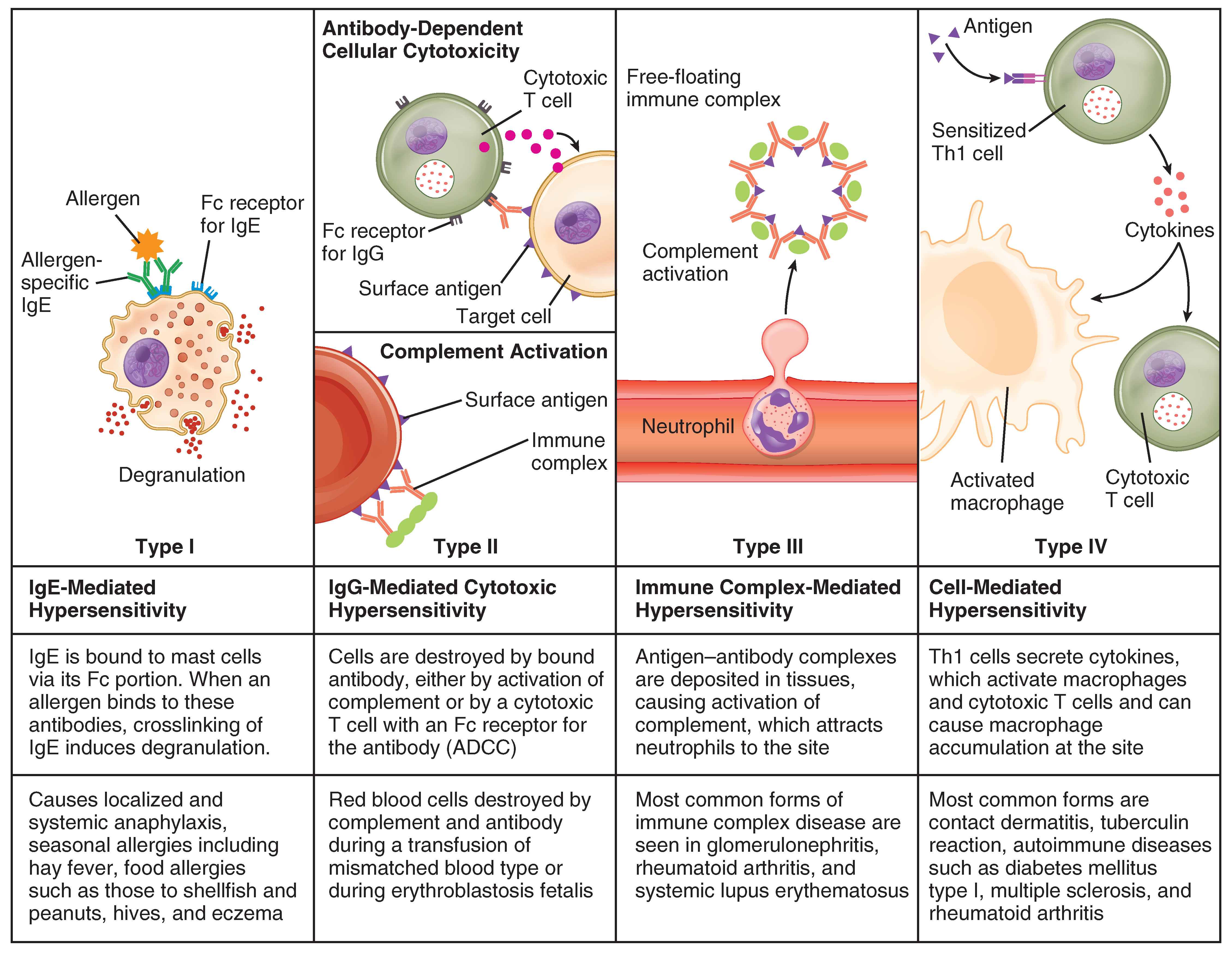 Diseases Associated with Depressed or Overactive Immune Responses