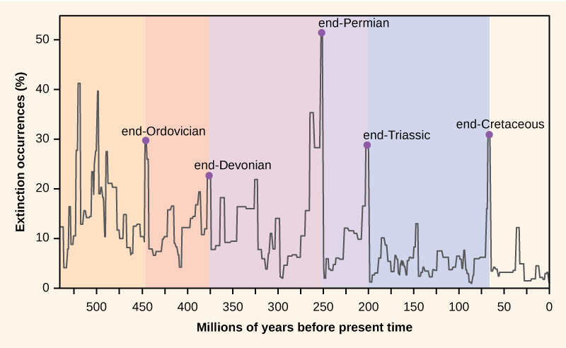 Graph plots percent extinction occurrences versus time in millions of years before present time, starting 550 million years ago. Extinction occurrences increase and decrease in a cyclical manner. At the lowest points on the cycle, extinction occurrences were between two to five percent. Spikes in the number of extinctions occurred at the end of geological periods: end-Ordovician (450 million years ago), end-Devonian (374 million years ago), end-Permian (252 million years ago), end-Triassic (200 million years ago), and end-Cretaceous (65 million years ago). During these spikes, extinction occurrences ranged from approximately twenty-five to fifty percent.