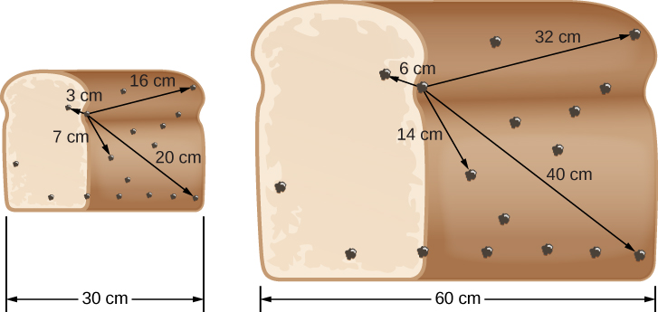"""Expanding Raisin Bread. In this illustration, the loaf of raisin bread at left is 30 cm wide. Arrows are drawn from a """"reference"""" raisin located to the left of center to four other raisins within the loaf, with distances indicated. Clockwise from upper left: 3 cm, 16 cm, 25 cm and 7 cm from the reference. At right, the loaf has expanded to 60 cm wide. The distances from the """"reference"""" raisin have increased accordingly. Clockwise from upper left: 6 cm, 32 cm, 50 cm and 14 cm."""
