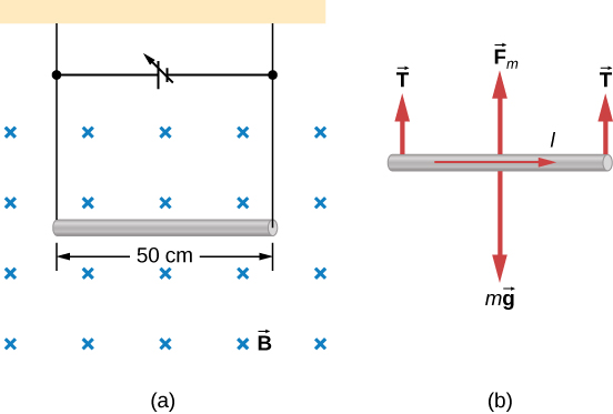 Figure a: An illustration of a wire suspended in a uniform magnetic field. The magnetic field points into the page. The wire is horizontal and is 50 cm long. A variable voltage source completes the circuit made by the wire and the leads used to suspend it. Figure b: A free body diagram of the wire. The current is to the right. The weight, mg, points down. Tension at either end is up. The magnetic force is up.