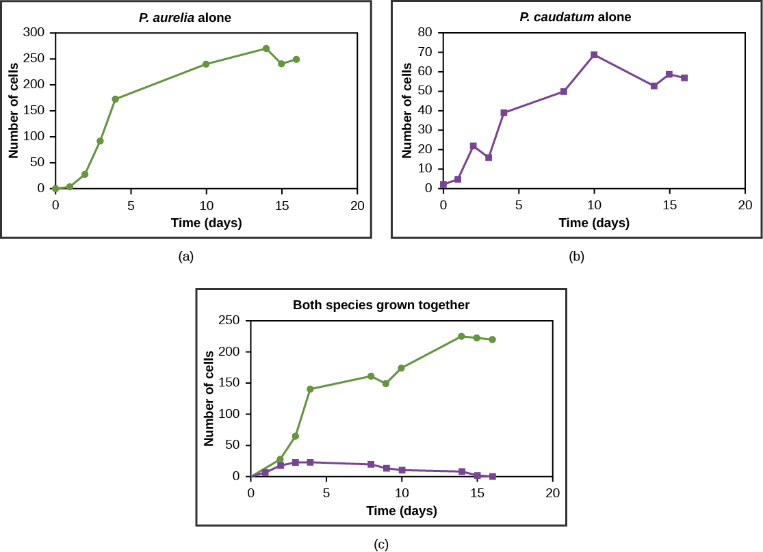 Graphs a, b, and c all plot number of cells versus time in days. In Graph (a), P. aurelia is grown alone. In graph (b), P. caudatum is grown alone. In graph (c), both species are grown together. When grown together, the two species both exhibit logistic growth and grow to a relatively high cell density. When the two species are grown together, P. aurelia shows logistic growth to nearly the same cell density as it exhibited when grown alone, but P. caudatum hardly grows at all, and eventually its population drops to zero.