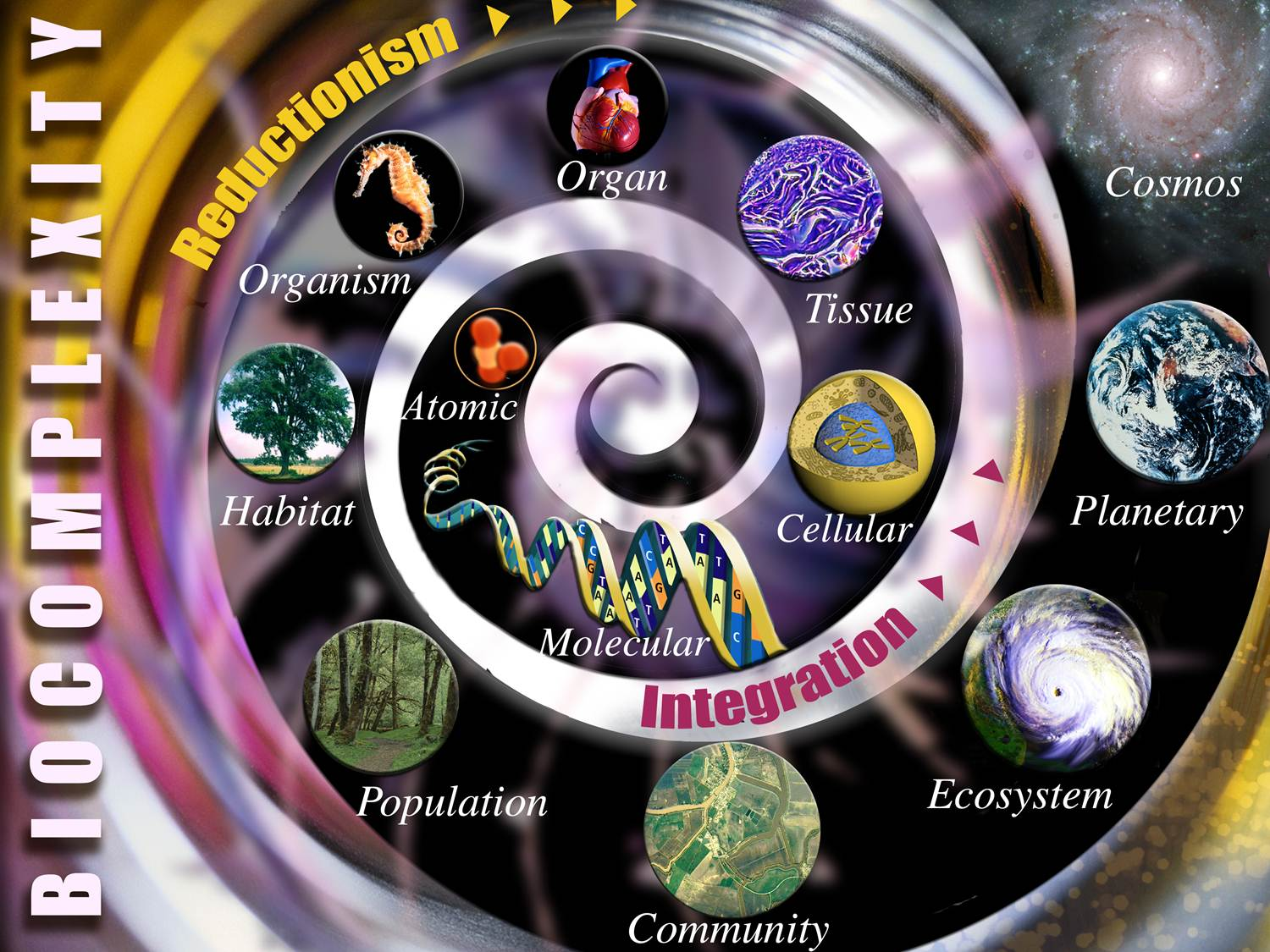 Image of Biocomplexity Spiral