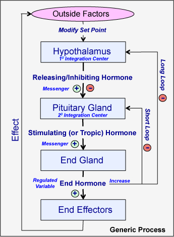 Flow diagram to show how a negative feedback system in the endocrine introduction to endocrine communication human physiology rh cnx org ccuart Images