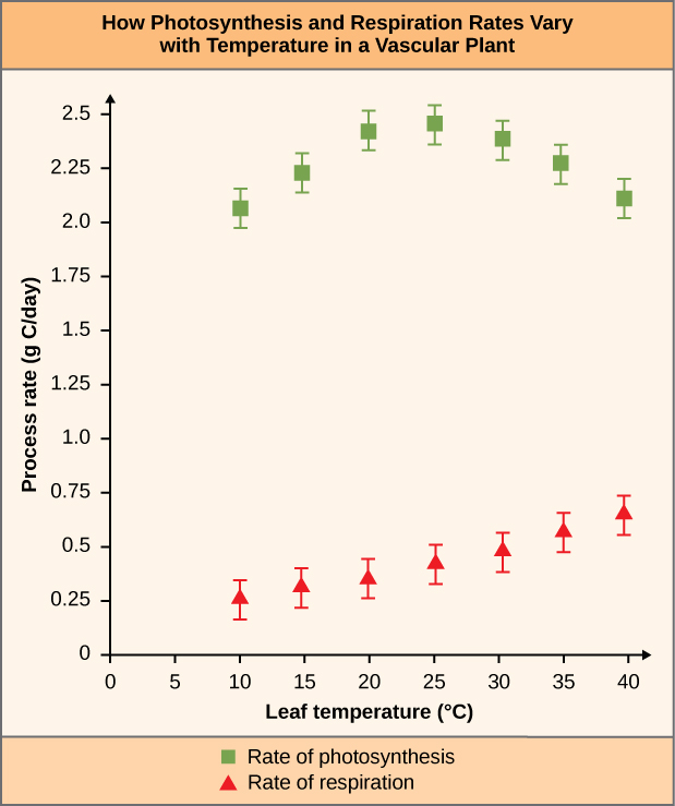 "Chart is titled ""How Photosynthesis and Respiration Rates Vary with Temperature in a Vascular Plant"". The chart measures the Process Rate (g C/day) against the leaf temperature (degrees Celsius). The rate of photosynthesis and the rate of respiration is measured. The rate of photosynthesis shows the following measurements. Leaf temperature 10, process rate of around 2-2.15. Leaf temperature 15, process rate 2.15-2.3. Leaf temperature 20, process rate 2.3-2.5. Leaf temperature 25, process rate 2.3-2.5. Leaf temperature 30, process rate 2.25-2.4. Leaf temperature 35, process rate 2.15-2.3. Leaf temperature 40, process rate 2-2.2. The rate of respiration shows the following measurements. Leaf temperature 10, process rate .2-.3. Leaf temperature 15, process rate .25-.4. Leaf temperature 20, process rate .3-.5. Leaf temperature 25, process rate .35-.55. Leaf temperature 30, process rate .4-.6. Leaf temperature 35, process rate .45-.7. Leaf temperature 40, process rate .5-.75."