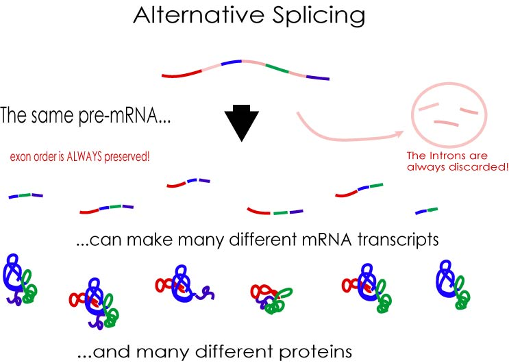 Figure 3 (alternative_splicing.jpg)