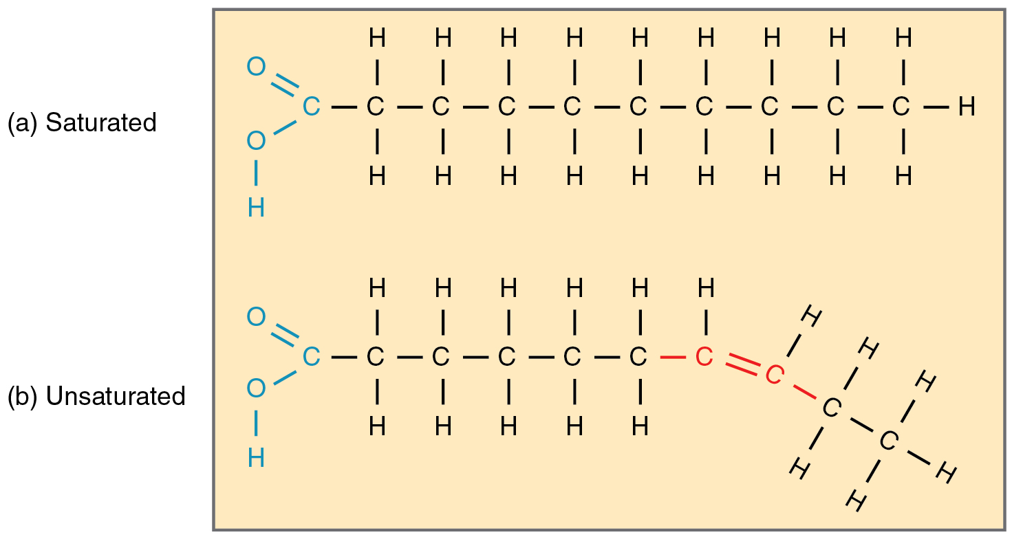This diagram shows the chain structures of a saturated and an unsaturated fatty acid.