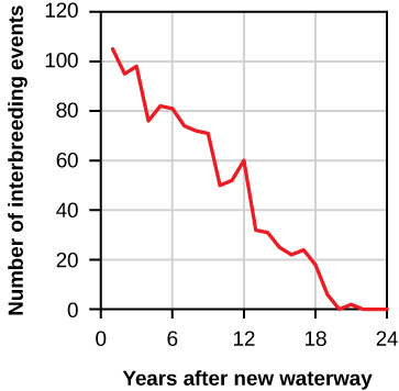 "The figure is a line graph. The x-axis is labelled ""Years after new waterway"" and has tick marks for every whole number from 1 to 24. The y-axis is labelled ""Number of interbreeding events"" and has tick marks for 0, 20, 40, 60, 80, 100, 120. The line's origin begins at above 100 interbreeding events. The line follows a general downward path with some small peaks. In Years 22 to 24, the value is near 0 percent."