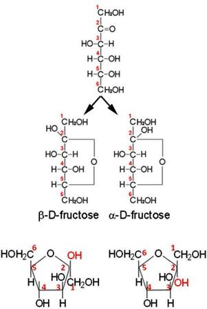 D and Lisomers of fructose openchain form Fructose is a 6carbon polyhydroxyketone Crystalline fructose adopts a cyclic sixmembered structure owing