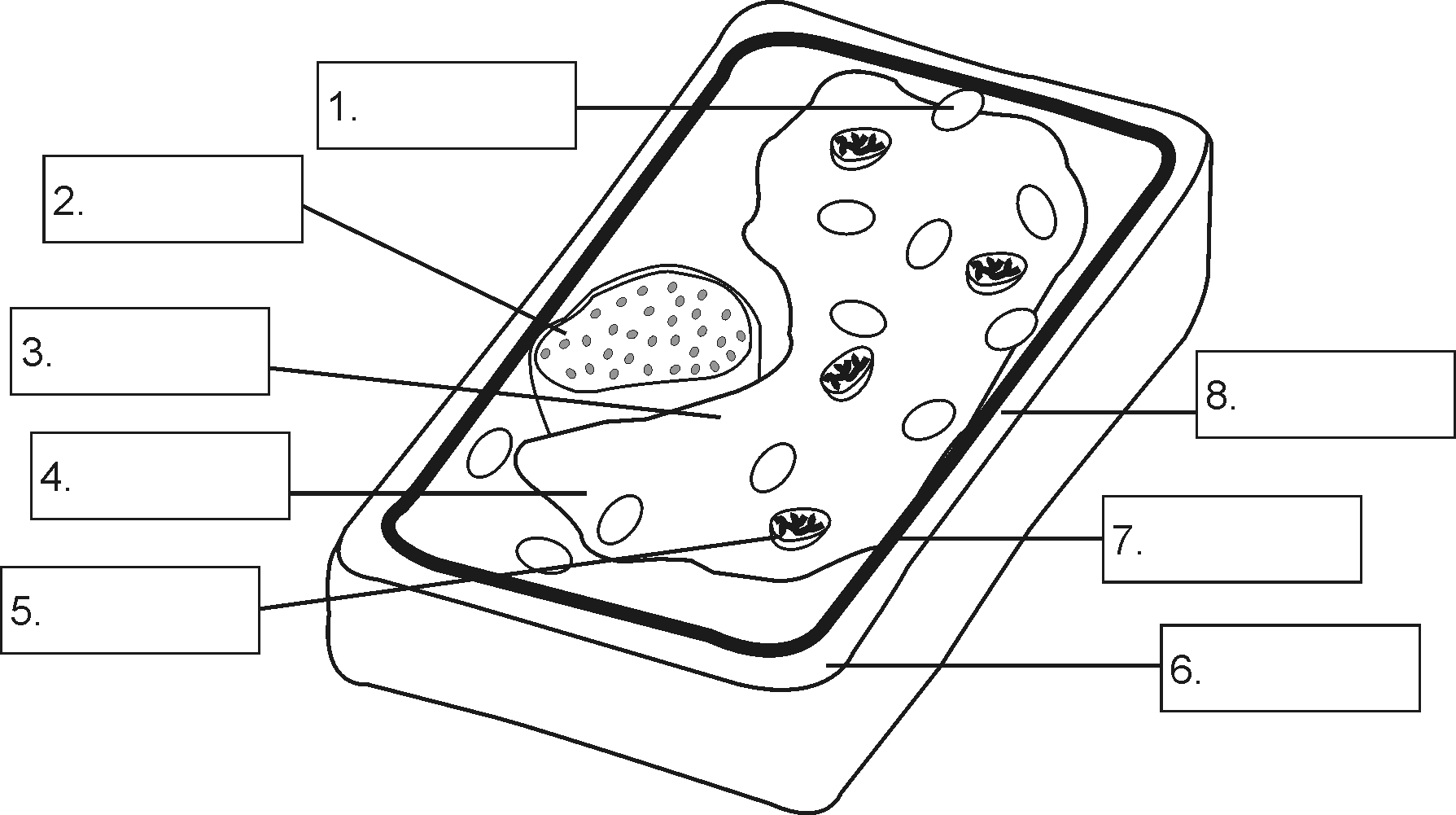 Animal Cell 3d Unlabeled And Plant Diagram Not Labeled