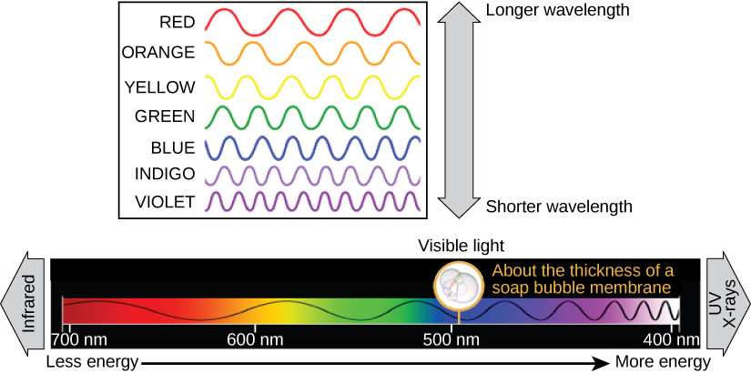 The illustration shows the colors of visible light. In order of decreasing wavelength, from 700 nanometers to 400 nanometers, these are red, orange, yellow, green, blue, indigo, and violet. 500 nanometers is about the thickness of a soap bubble membrane. Infrared has longer wavelengths than red light, and uv and X-rays have shorter wavelengths than violet light.
