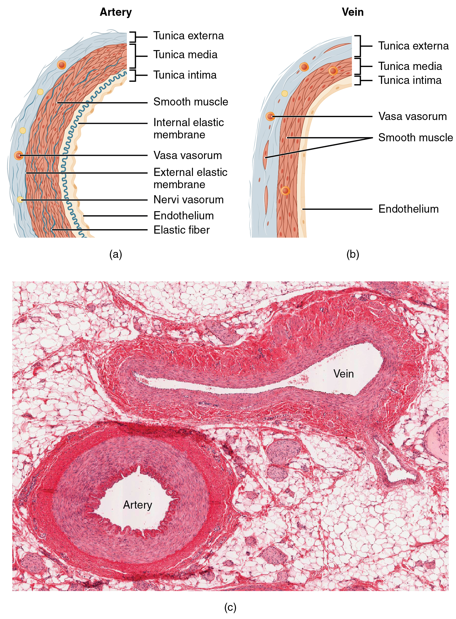 Development Of An Electromagnetic Induction Method For Non Invasive Fileoptic Fibrenumerical Aperture Diagramsvg Wikimedia Commons Blood Flow Measurement In Clinical Applications