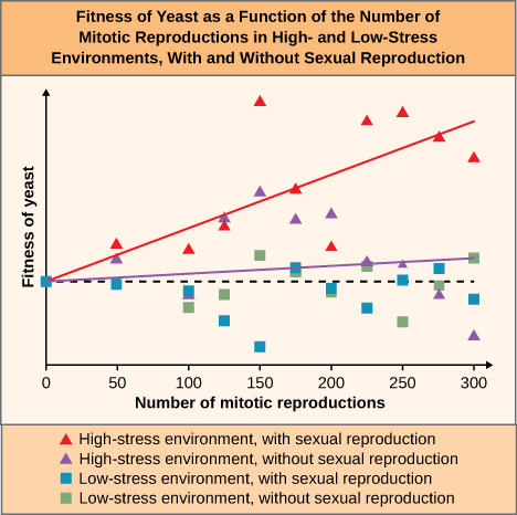 The line graph is titled: Fitness of Yeast as a function of the number of mitotic reproductions in High and low stress environments with or without sexual reproduction. The key at the bottom states that red tringles are high-stress environments with sexual reproduction, purple triangles are high-stress environments without sexual reproduction, blue squares are low-stress environment with sexual reproduction and green squares are low stress environments without sexual reproduction. The x-axis is labelled Number of mitotic reproductions and has tick marks for 0, 50, 100, 150, 200, 250, and 300. The Y axis is labelled 0 approximately ¼ of the way up the graph. There is a red diagonal line that starts at 0,0 and ends near the top of the y-axis when the x-axis value is 300. There is a purple diagonal line that starts at 0, 0 and ends slightly above 0 at 300.  At 50 on the x axis, there is a blue square at 0 on the y-axis, a purple and a red triangle above zero . At 100 on the x-axis, there is a green square and a blue square under the 0 point and a red square above the 0 point. Between 100 and 150, there is a blue square and green square below and a red triangle and a purple triangle above the 0.  At the 150 point on the x axis, there is a blue square well below the 0, a green square a bit above the 0, an purple and red triangles well above the 0. Between 150 and 200, all four colors are above 0. At the 200 point, the blue and green squares are below 0 and the red and purple triangles are well above 0. Between 200 and 250, the blue square is below 0 and all other colors are above 0. At 250 the green square is well below 0, the blue square is right on 0, the purple triangle is above 0, and a red triangle near the top of the graph.  Between 250 and 300 the purple and green triangles are below zero, the blue square is above zero, and the red triangle is near the top of the graph. At 300, the purple triangle and blue square are below zero, the green square is above zero, and