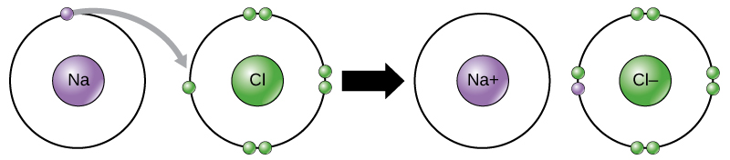 A sodium and a chlorine atom sit side by side. The sodium atom has one valence electron, and the chlorine atom has seven. Six of chlorine's electrons form pairs at the top, bottom and right sides of the valence shell. The seventh electron sits alone on the left side. The sodium atom transfers its valence electron to chlorine's valence shell, where it pairs with the unpaired left electron. An arrow indicates a reaction takes place. After the reaction takes place, the sodium becomes a cation with a charge of plus one and an empty valence shell, while the chlorine becomes an anion with a charge of minus one and a full valence shell containing eight electrons.