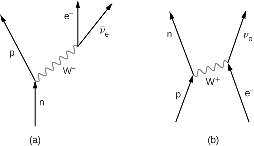 Figure a shows four arrows. One arrow, labeled n, points up and its tip meets the base of another arrow going up and left, labeled p. To the right of this is an arrow labeled e minus pointing up. Its base is connected to the base of another arrow going up and right. This is labeled v bar subscript e. The two junctions on the graph are connected by a wavy line labeled W minus. This points up and right. Figure b shows four arrows. One arrow, labeled p, points up  and right. Its tip meets the base of another arrow going up and left, labeled n. To the right of this is an arrow labeled e minus pointing up and left. Its tip meets the base of another arrow going up and right. This is labeled v subscript e. The two junctions on the graph are connected by a wavy line labeled W plus. This points up and right.