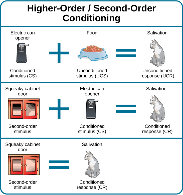 "A diagram is labeled ""Higher-Order / Second-Order Conditioning"" and has three rows. The first row shows an electric can opener labeled ""conditioned stimulus"" followed by a plus sign and then a dish of food labeled ""unconditioned stimulus,"" followed by an equal sign and a picture of a salivating cat labeled ""unconditioned response."" The second row shows a squeaky cabinet door labeled ""second-order stimulus"" followed by a plus sign and then an electric can opener labeled ""conditioned stimulus,"" followed by an equal sign and a picture of a salivating cat labeled ""conditioned response."" The third row shows a squeaky cabinet door labeled ""second-order stimulus"" followed by an equal sign and a picture of a salivating cat labeled ""conditioned response."""