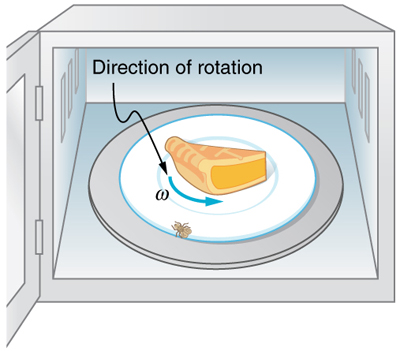 The Figure Shows A Fly That Has Landed On Rotating Plate Of Microwave