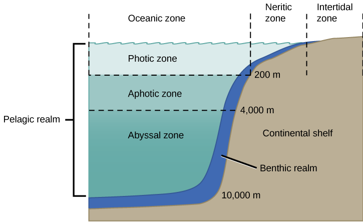 The ocean is divided into different zones based on water depth and distance from the shoreline