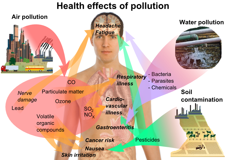 Graphic of human health effects of environmental pollution from