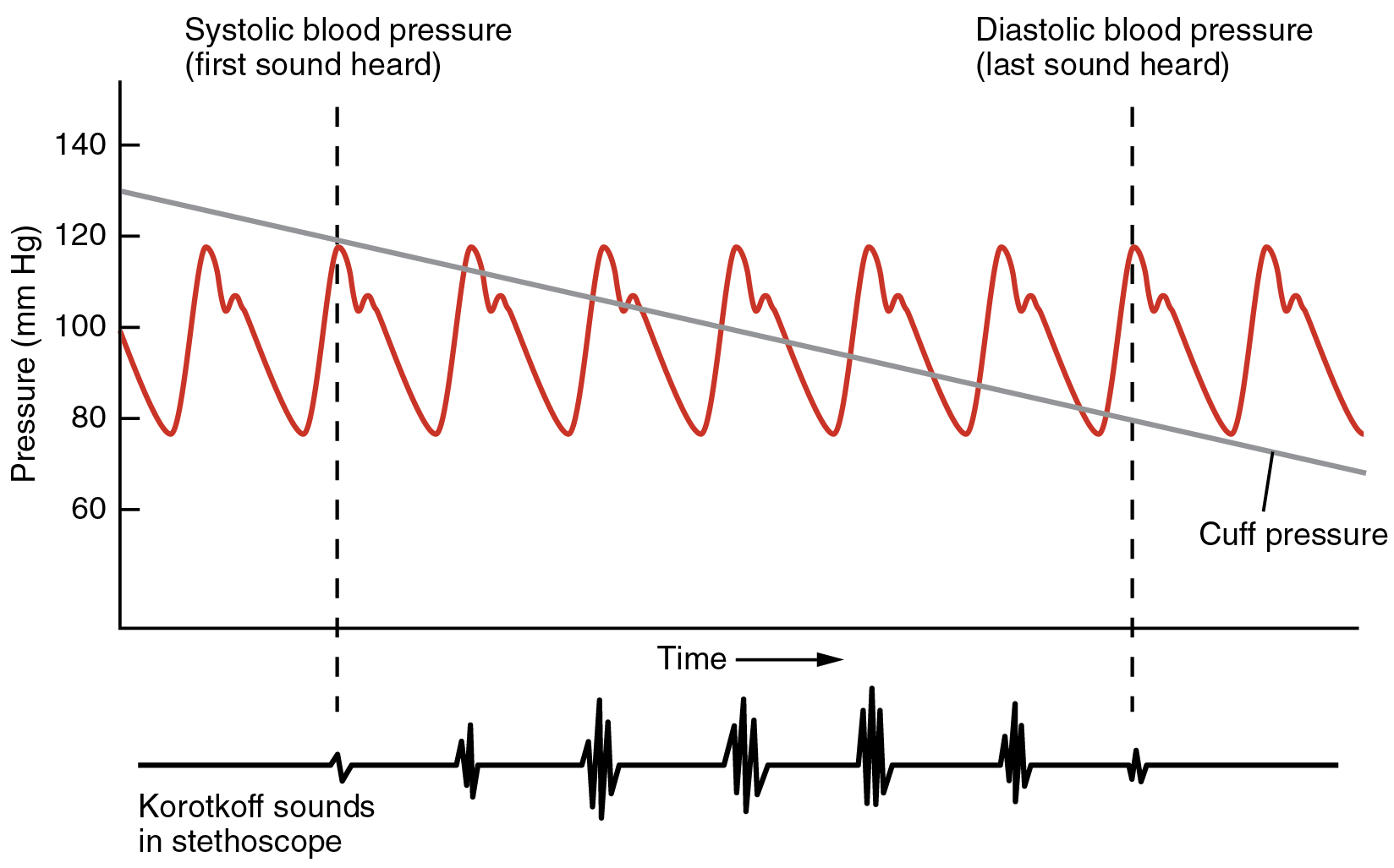 Blood Flow, Blood Pressure, and Resistance - Anatomy & Physiology ...